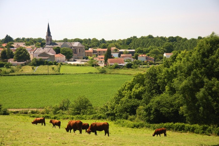 balade en calèche dans la nature en Vendée