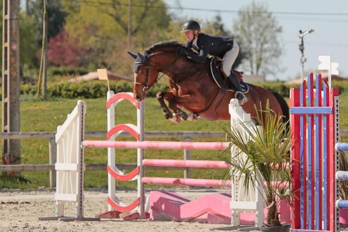 valorisation des chevaux avec pension de cheval
