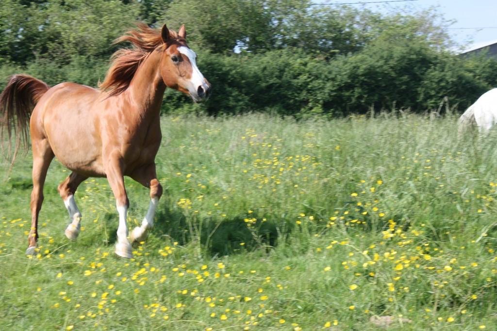 Gites equestres en Vendée avec pension de cheval