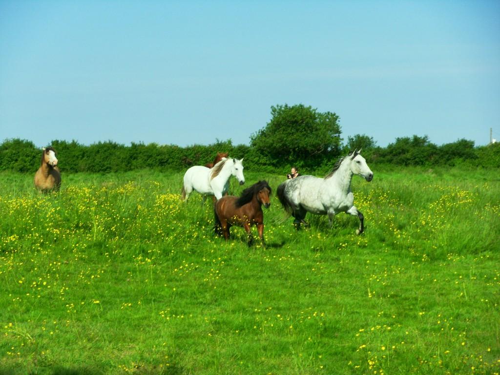 Pension de cheval en Vendée aux gites equestres les Rousselières